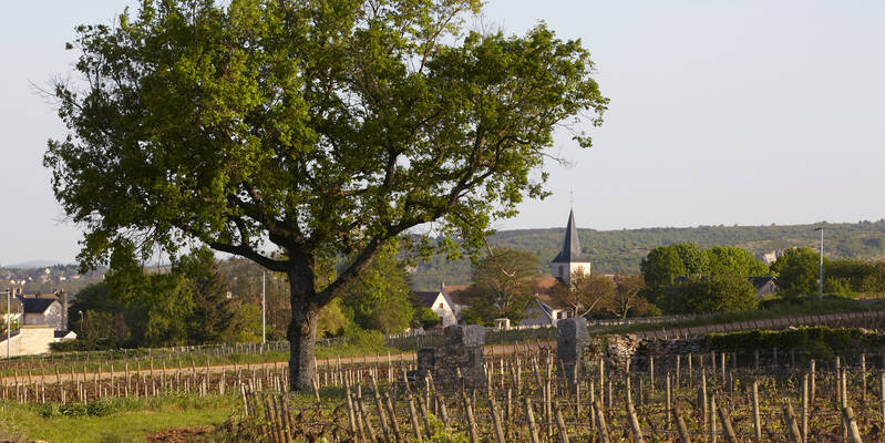 Dorp Chassagne-Montrachet  © Atelier photo Muzard