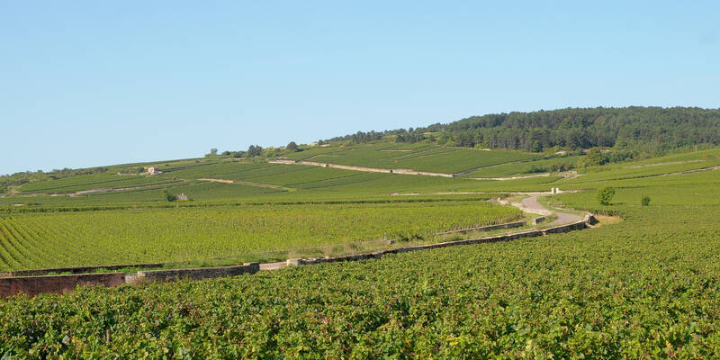 Wijngaarden van Pommard