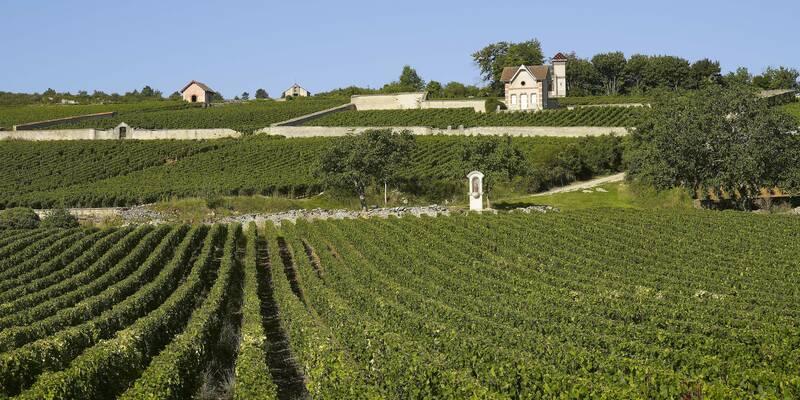 Wijngaarden in Meursault
