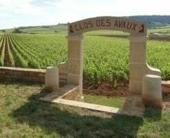De Bourgondische wijnen