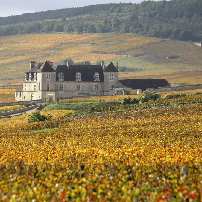 Clos de Vougeot,Uitzicht op de wijngaarden